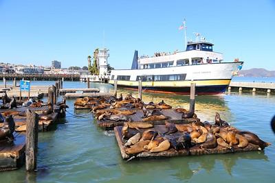 Seals in San Francisco
