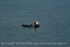Sea Otters, Moss Landing, CA (10)