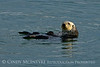 Sea Otters, Moss Landing, CA (10) copy