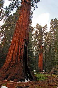 The General Sherman in the background
