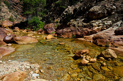 Little Backbone Creek - Shasta Lake - California - USA