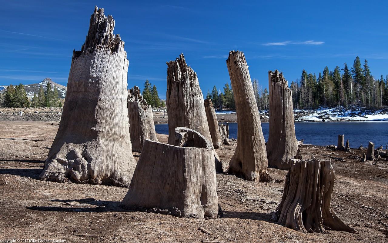 Dead trees at Scotts Lake