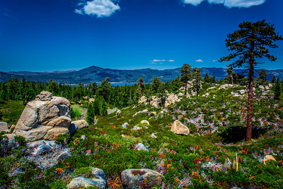 Skyline Trail - Big Bear, CA, USA