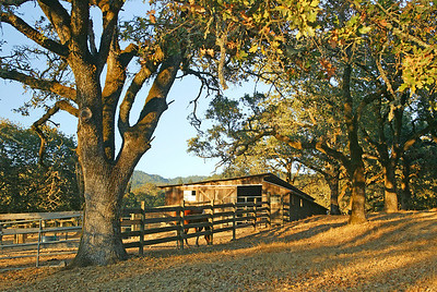 corral at Beltane Ranch