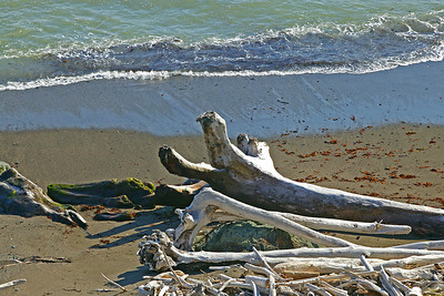 driftwood on beach Sonoma coast