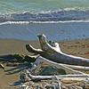 driftwood on beach Sonoma coast