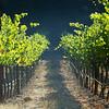 Beltane vineyard