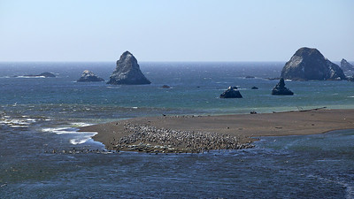 seals & pelicans Goat Island
