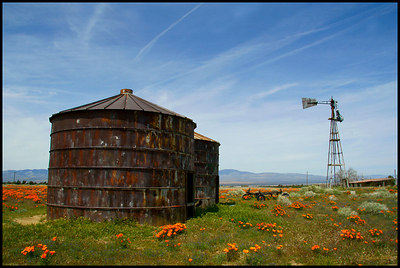 Silos and Poppies