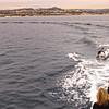Dolphin, Dana Point