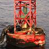 Seals on Buoy, Dana Point, California