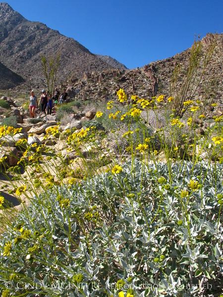 Anza Borrego SP Palm trail, S Calif (5)