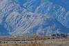 Wind turbine farm near Palm Springs CA