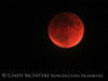 Blood Moon 9-27-15, S Calif (11)