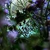 Flower Wanderer