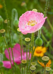 Descanso Gardens_D90-7961