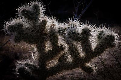 Joshua Tree National Park--Twentynine Palms, California