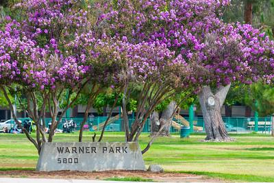 Warner Park_Woodland Hills-3833