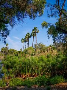 San Diego Safari Park-01
