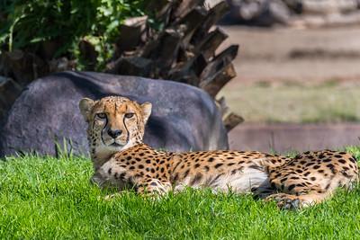 San Diego Safari Park-1249