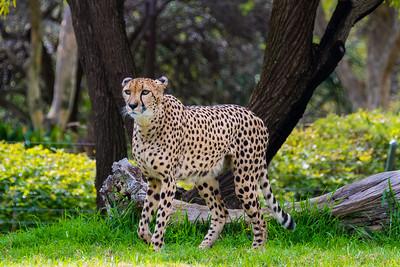 San Diego Safari Park-1097