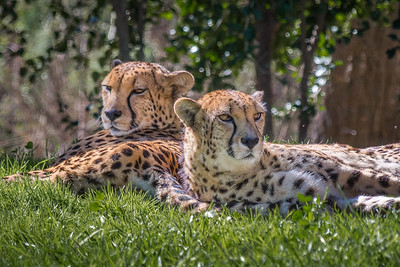 San Diego Safari Park-1228