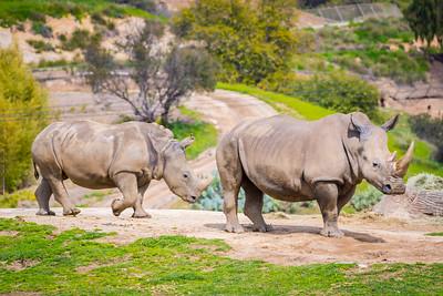 San Diego Safari Park-1079