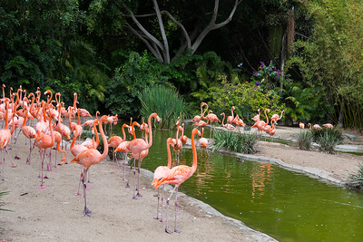 San Diego Zoo-8773