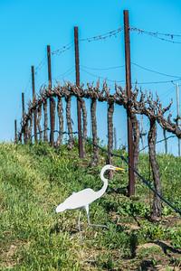 Temecula_Hart Winery-1610