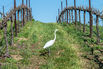 Temecula_Hart Winery-1609