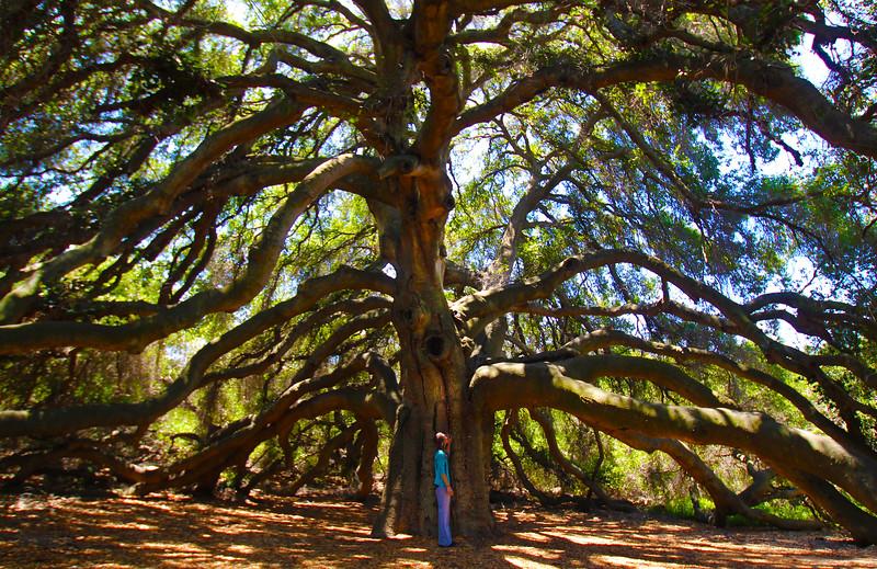 Temecula California, Pechanga Reservation, The Great Oak