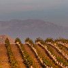 Temecula California,  Wine Country