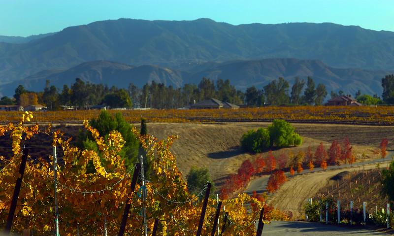 Temecula California, Autumn Harvest