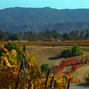 Temecula California, Autumn Harvest