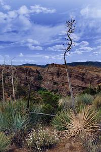 Yucca at Vasquez Rocks