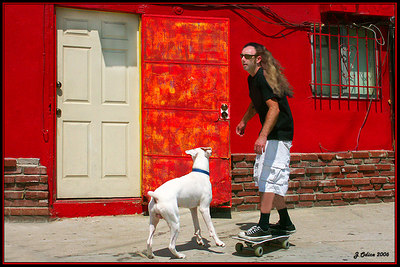 A Boy, A Dog and A Skateboard Venice Beach CA