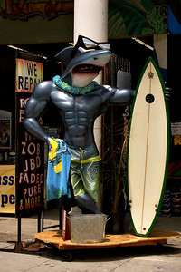 Shark Surfer Venice Beach