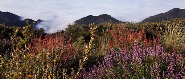 Nordhoff Ridge, Las Padres National Forest, springtime wildflowers