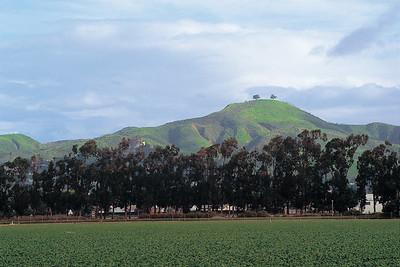 Two Tree Hill, Ventura