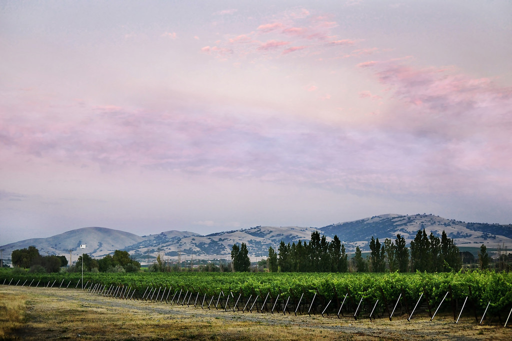 Vineyard - Concannon Road, Livermore, CA