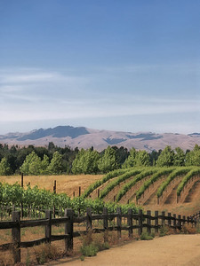 (17) Vineyard 1 - Livermore, CA.  One of my favorites, this was used for a friends wine label.