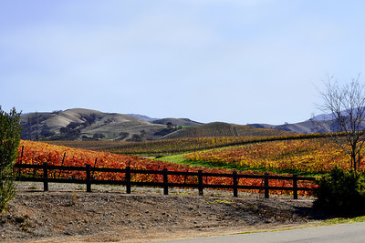 Arroyo Road, Livermore, CA   November.