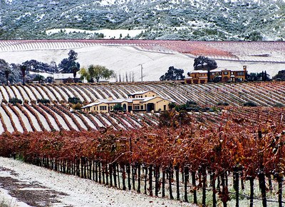 12 - OG - Snow in vineyard on Greenville Road