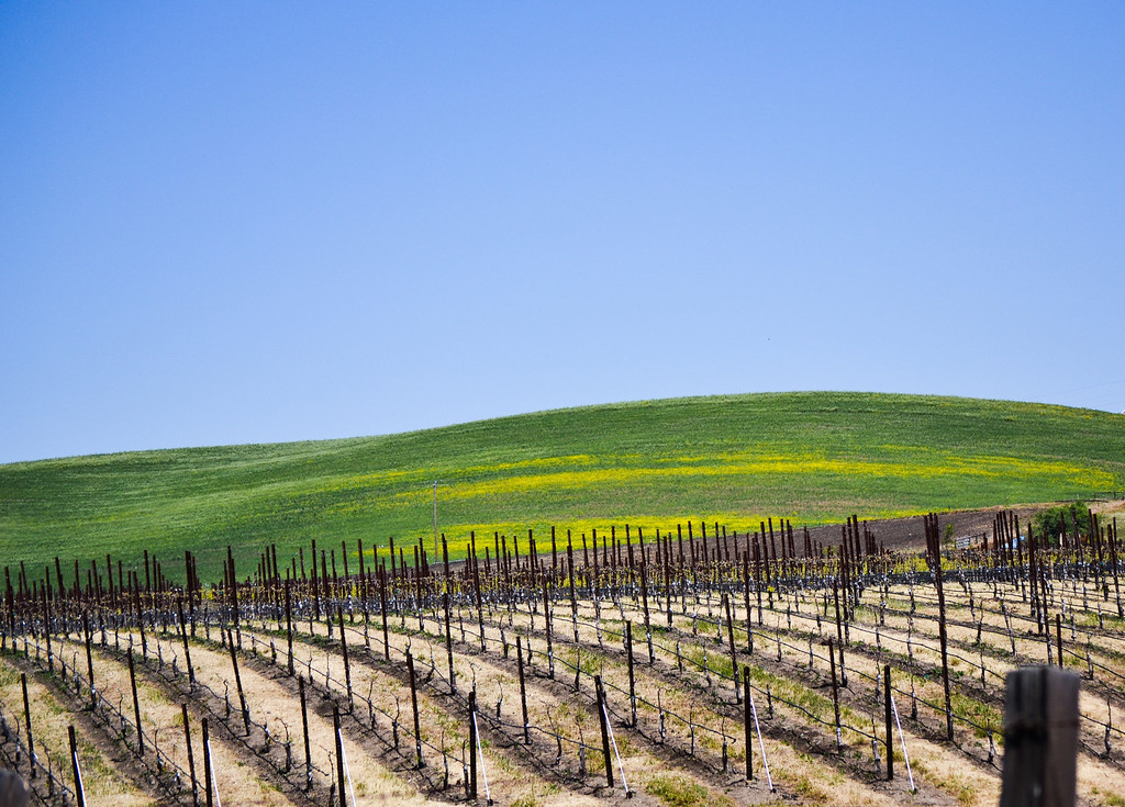 Vineyard Greenville Road, Livermore, CA