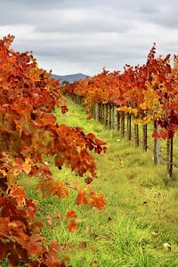 Vneyard - November colors