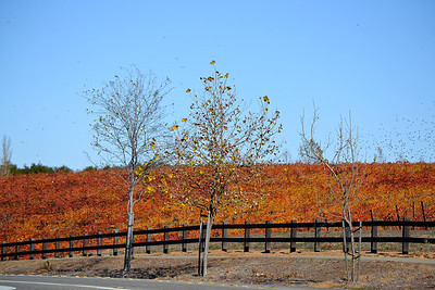Arroyo Road Vineyard in Fall