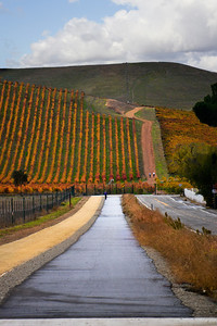 Vineyard - November colors - Bikepath on Concannon Blvd.