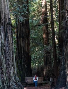 Walk In The Redwoods 2016