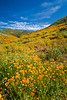The spring poppy fields in Walker Canyon near Lake Elsinore, California, USA.
