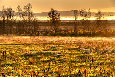 Sunrise over a meadow in Napa Valley as the fog rolls in the distance
